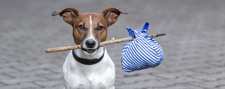 packing checklists for dog friendly vacations allianz global