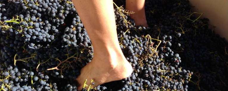 Grape Stomping: 8 Wine Destinations Where You Can Try
